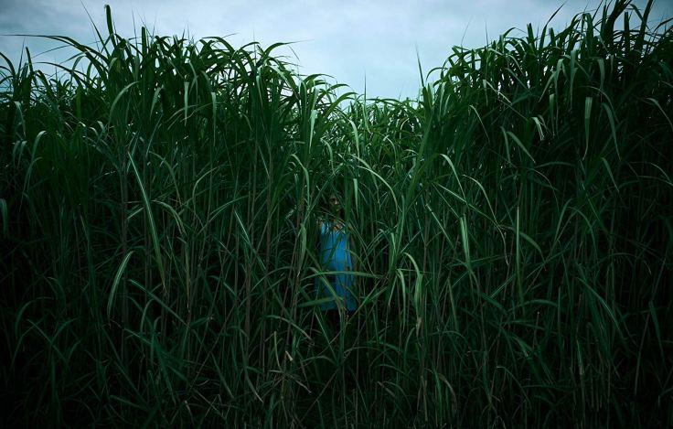 tall grass pic 1
